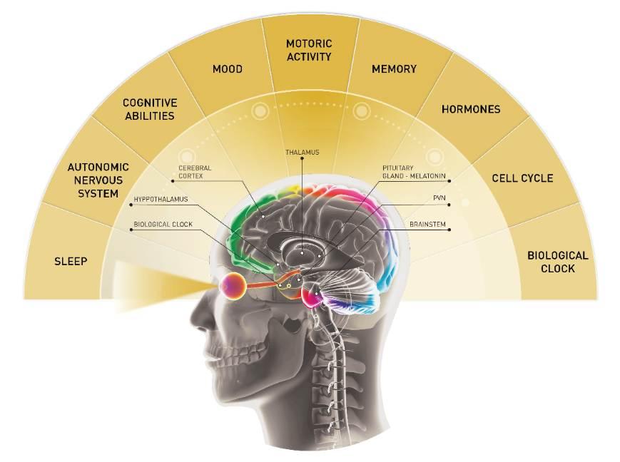 Influence Brain